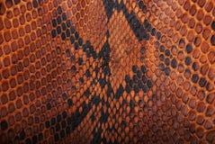 Wąż skóra pattern Fotografia Stock