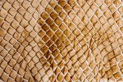 Wąż skóra - tekstura zdjęcia royalty free