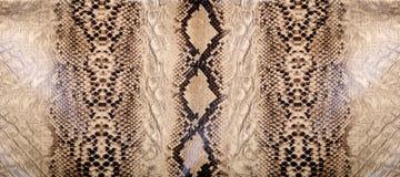Wąż skóry tekstura Obrazy Royalty Free