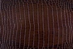 wąż tekstura rzemienna tekstura fotografia royalty free
