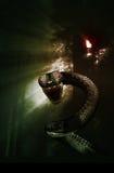 Wąż w tajemniczym lesie Obrazy Stock
