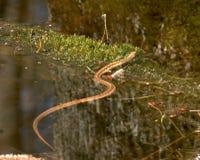 wąż wody Zdjęcia Royalty Free
