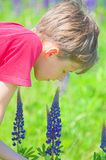 wąchać kwiaty zdjęcie royalty free