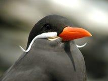 wąsaty ptaka. Obrazy Stock