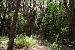 Wąska ścieżka przez lasu w Kauai Hawaje Zdjęcia Royalty Free