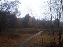 Wąska ścieżka w lesie obraz stock
