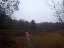 Wąska ścieżka w lesie zdjęcie stock