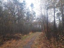 Wąska ścieżka w lesie obraz royalty free