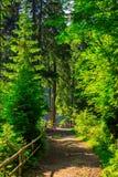 Wąska ścieżka w lesie z małym drewnianym płotowym zwrotem dobro Obraz Royalty Free
