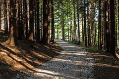 Wąska ścieżka zaświecająca miękkim wiosny światłem słonecznym Lasowa wiosny natura Wiosna lasowy naturalny krajobraz z lasowymi d Obraz Royalty Free