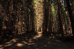 Wąska ścieżka zaświecająca miękkim wiosny światłem słonecznym Lasowa wiosny natura Wiosna lasowy naturalny krajobraz z lasowymi d Fotografia Stock