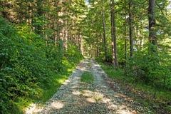 Wąska ścieżka zaświecająca miękkim wiosny światłem słonecznym Lasowa wiosny natura Wiosna lasowy naturalny krajobraz z lasowymi d Zdjęcia Stock