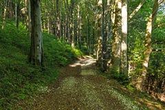 Wąska ścieżka zaświecająca miękkim wiosny światłem słonecznym Lasowa wiosny natura Wiosna lasowy naturalny krajobraz z lasowymi d Zdjęcie Royalty Free