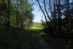 Wąska ścieżka zaświecająca miękkim wiosny światłem słonecznym Lasowa wiosny natura Wiosna lasowy naturalny krajobraz z lasowymi d Obraz Stock