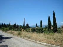 Wąska asfaltowa droga na gorącym słonecznym dniu za wiecznozielonymi drzewami i dogrzewającą trawą fotografia stock