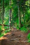 Wąska halna ścieżka w iglastym lesie z małym drewnianym fe Fotografia Stock