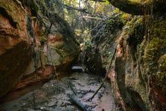 Wąska lasowa rzeka między naturalnie tworzy zawala się obrazy royalty free