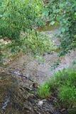 Wąska zatoczka między drzewami Zdjęcie Stock