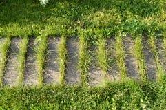 wąski drewniany zwyczajny ślad, przerastający z trawą zdjęcie royalty free
