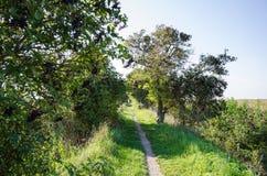 Wąski footpath otaczający elderberries fotografia royalty free