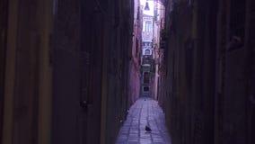 Wąskie ulicy Wenecja z starymi domami wokoło zdjęcie wideo