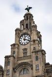 Wątrobowi ptaki na Wątrobowym budynku W Liverpool Anglia Obrazy Royalty Free