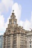 Wątrobowi ptaki na Wątrobowym budynku W Liverpool Anglia Obraz Stock