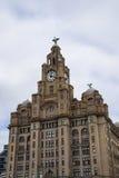 Wątrobowi ptaki na Wątrobowym budynku W Liverpool Anglia Zdjęcie Stock