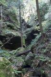Wąwóz ściana i las, Conkles natury Dudniąca prezerwa zdjęcia stock