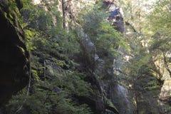 Wąwóz ściana i las, Conkles natury Dudniąca prezerwa zdjęcie royalty free