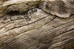 węźlasty drewno Fotografia Royalty Free
