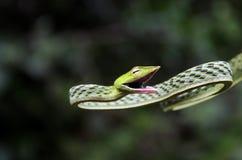 węże Zdjęcia Stock