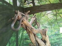 węże obraz stock
