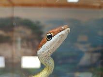 węże zdjęcie stock