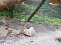 węże Fotografia Stock