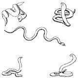 węże nakreślenie ręką tła rysunku ołówka drzewny biel Obraz Stock
