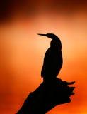 Wężowa sylwetka z mglistym wschodem słońca Fotografia Royalty Free