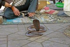 Węży podrywacze w Jemaa al Fnaa, Marrakech Maroko zdjęcia stock