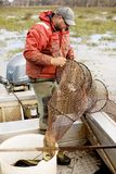 Węgorzowy rybak Zdjęcie Royalty Free