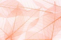 Włókno liścia Piękny kolor zdjęcie royalty free