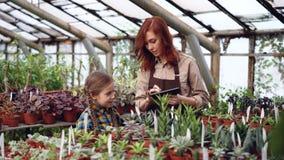 Właściciel cieplarnia robi inwentarzowe liczenie rośliny, działaniu z pastylką i podczas gdy jej ciekawa córka dotyka zbiory wideo