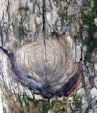 Właśnie barkentyna na drzewie Patrzeje ten fotografię od odległości od różnych kątów i! Zdjęcie Royalty Free