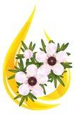 właśnie leptospermum manuka herbaty drzewo Zdjęcia Stock