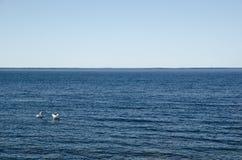 Łabędzia para w błękitne wody Zdjęcia Royalty Free