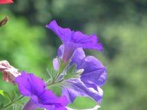 Właśnie perfect kwiat Zdjęcia Royalty Free
