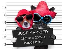 Właśnie zamężny mugshot Fotografia Royalty Free