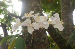 Władza biały storczykowy kwiat Fotografia Stock