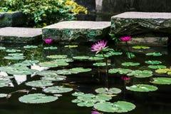 Własnego Spokoju Zen Wodnej lelui stawu ogród fotografia royalty free