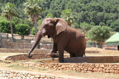 Włochy, Apulia, Fasano słoń w zoosafari Zdjęcia Stock