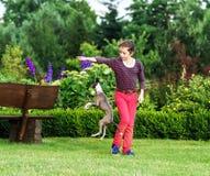 Włoska charcica bawić się w wieś parku zdjęcie royalty free